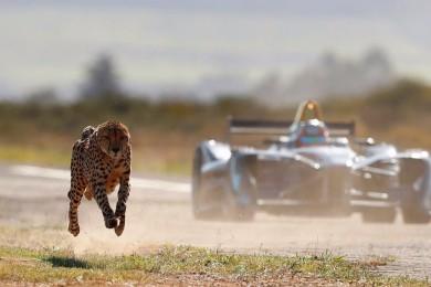 Formule vs Gepard